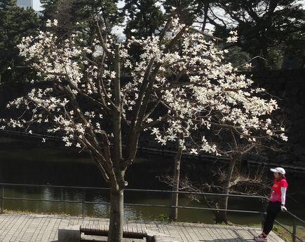 江戸城竹橋付近