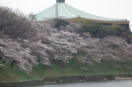 清水門から見た武道館