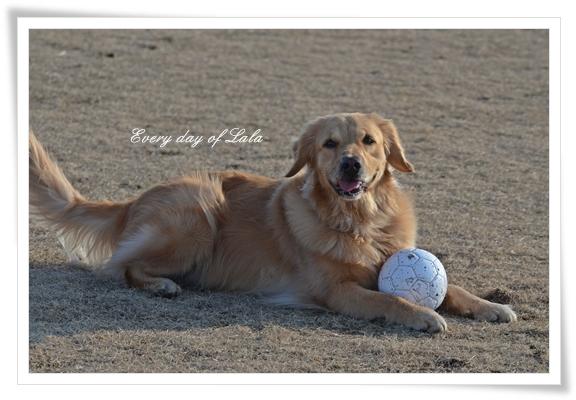 ボール好き201301