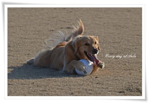 ボール好きなの201301