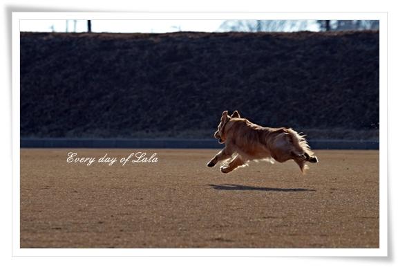 飛行犬201301