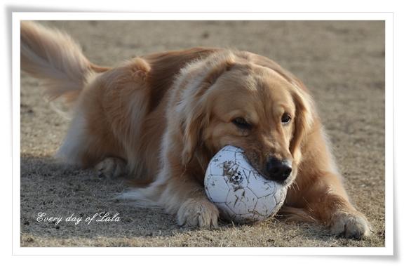 ボールうまい?201302