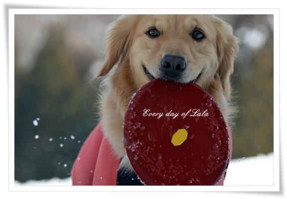 フリスビーと雪遊び201303