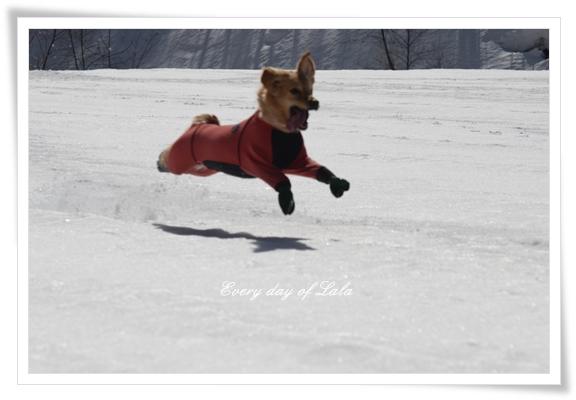 飛行犬中201303