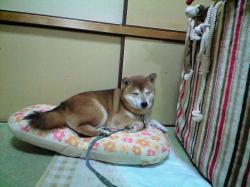 kyukei5.jpg
