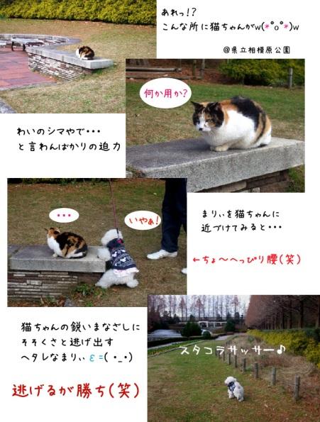 まりぃ、猫と遭遇