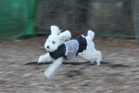 ウサギはねる!