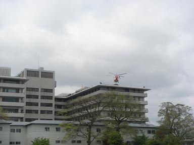 ごんちゃん 0011