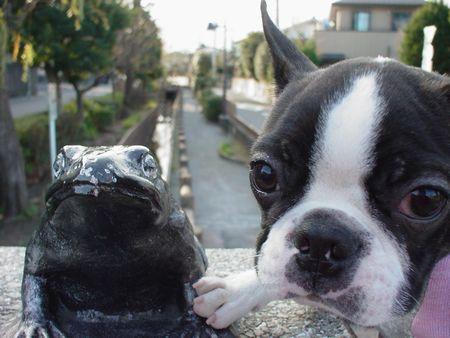 散歩を見守るカエルさん