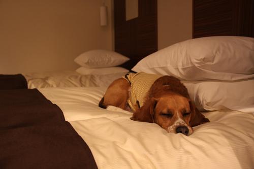 ベッドでうとうと