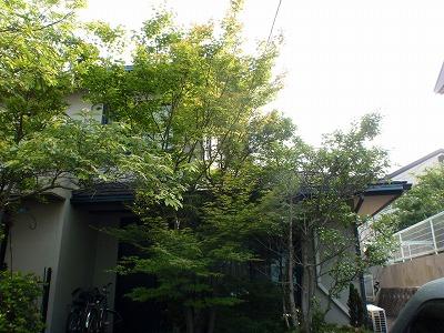 玄関前 Before