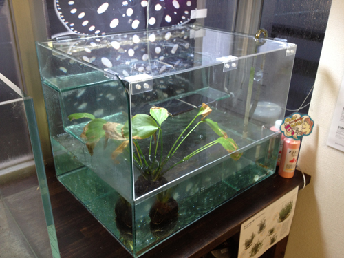 ADAウォーターフォール蓋 東海 岐阜 熱帯魚 水草 観葉植物販売 Grow aquarium