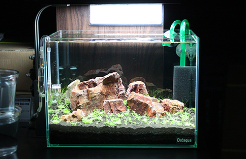 渓石 けいせき使ってみました♪ 東海 岐阜 熱帯魚 水草 観葉植物販売 Grow aquarium
