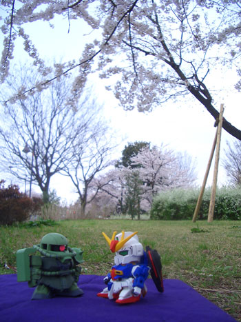 花見0405