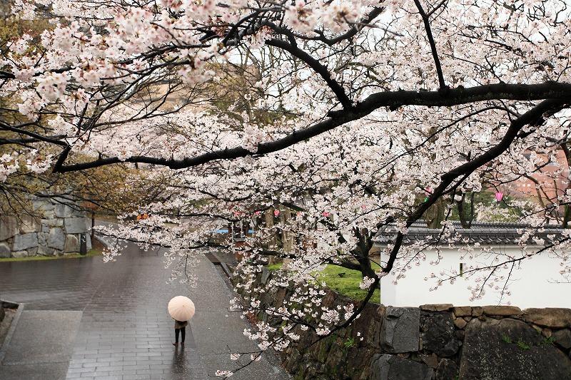 小倉城桜003