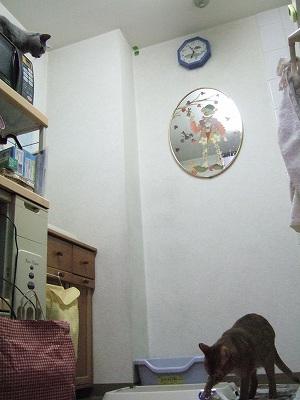 2009_12010012.jpg