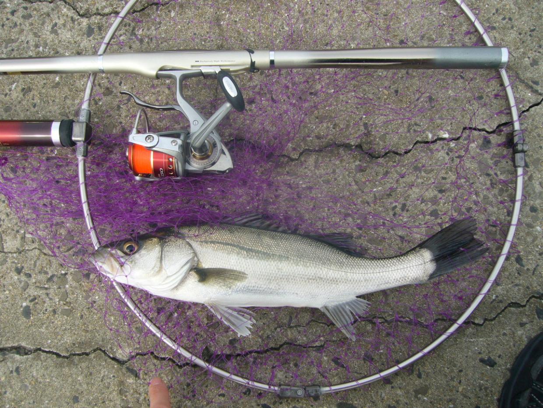 とり合えず釣れてよかった ハネ40cm