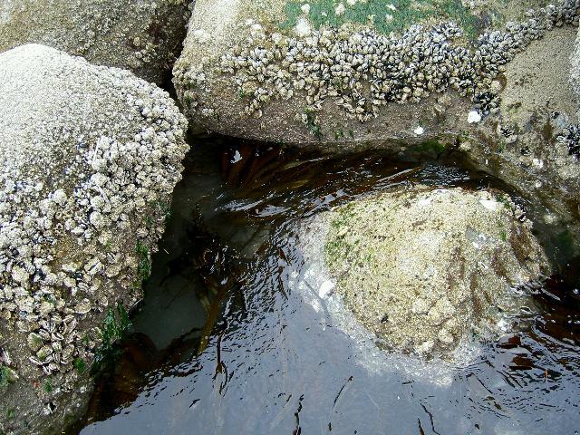 ブロックに生えた海草