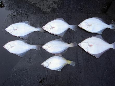 本日の釣果