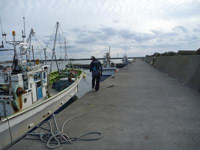 港のpoko
