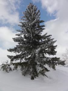旧津別スキー場 067