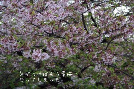 IMGP0122 - コピー