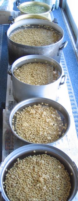 大豆を水に浸す
