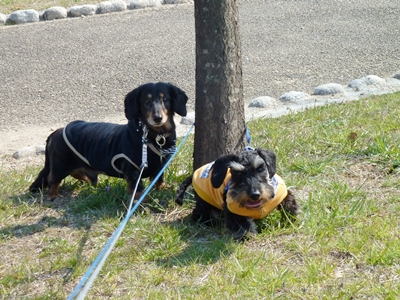 散歩中のダックとニコル