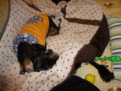ダックの上で寝るニコル