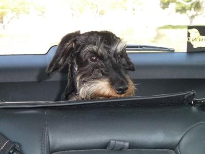 車の中でのニコル