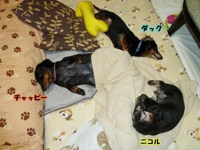 昼寝から起きた3ワン