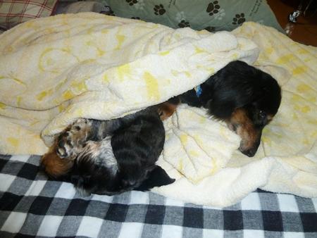 仲良く眠る兄弟1