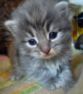 2010/3/21誕生 ぶるーの子猫