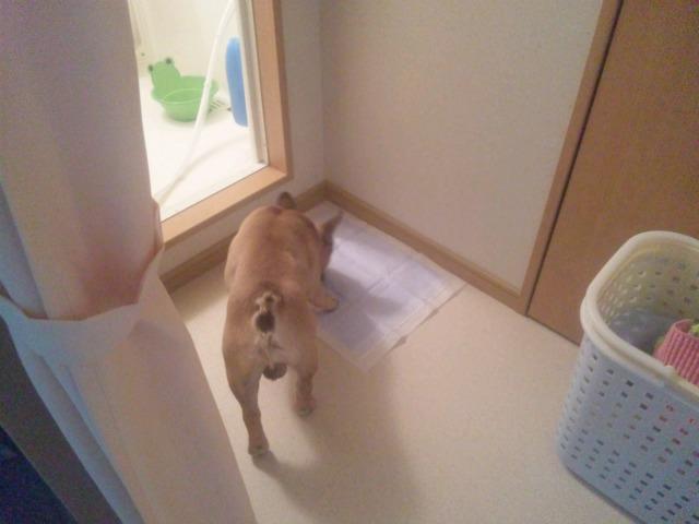 CAT3N5OO.jpg
