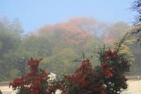 朝霧に煙る