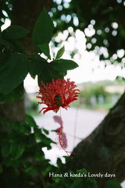 46南国花