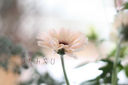 IMG_4033_edited-1のコピー