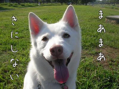 SANY0052_20100911095859.jpg