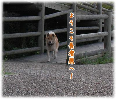 SANY0112-1.jpg