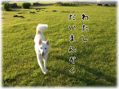 SANY0123_20101006175135.jpg