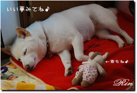 いい夢みてね~♪