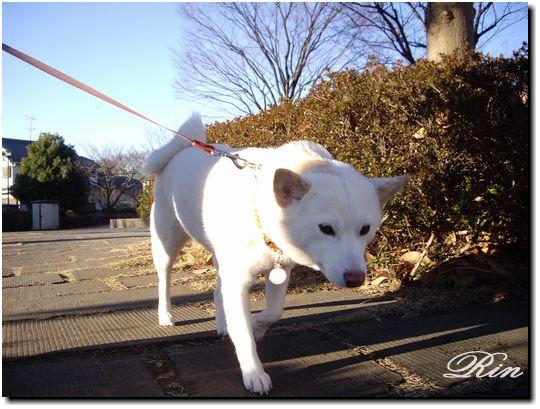 朝のお散歩~♪