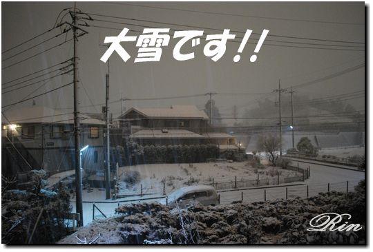 初雪で大雪です!!