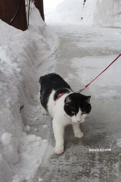 そら、雪道散歩