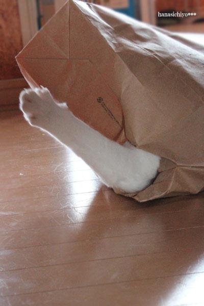紙袋猫そら