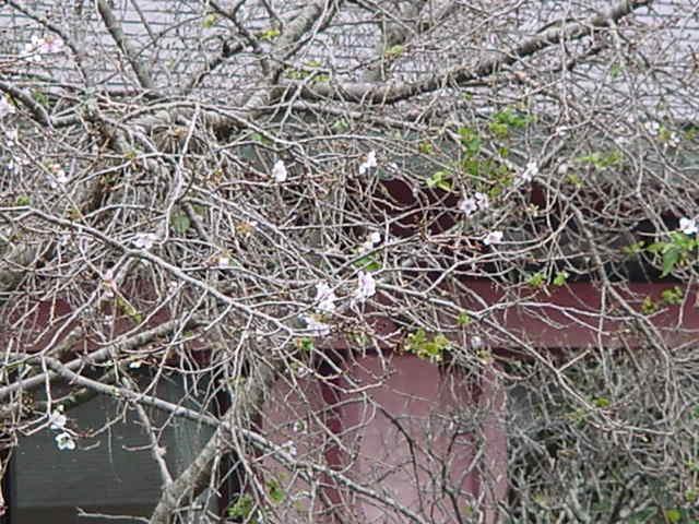 20101114笠間稲荷 005