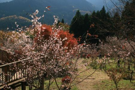 城峯公園の秋