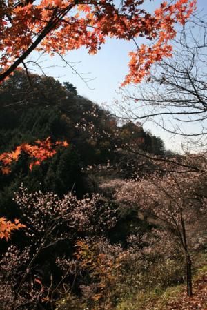 桜山公園の秋