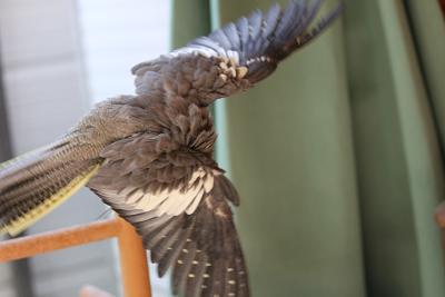 きれいな羽~