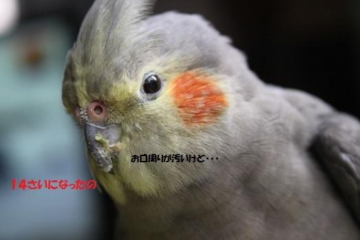 IMG_9427.jpg